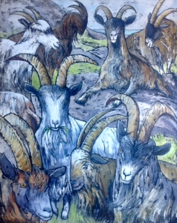 New Season New Goats!