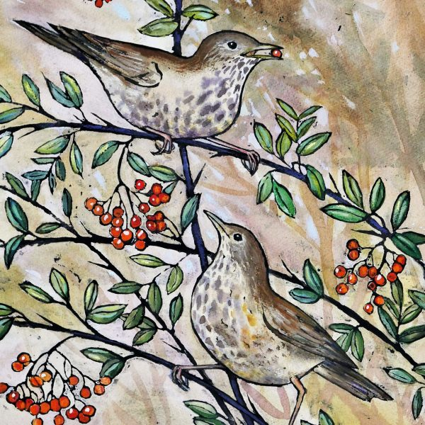 mistlethrushes