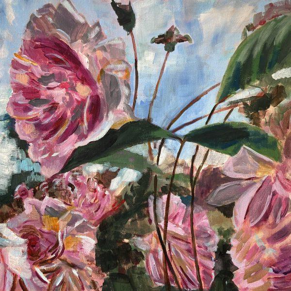 Rosemoor Roses